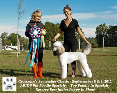 Standard Poodle Breeder | Boarding | Grooming | Udora ON near Toronto